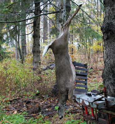 deer2018 (2)